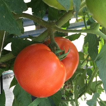Summer Veggie Gardening
