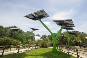 Harnessing the Power of Solar